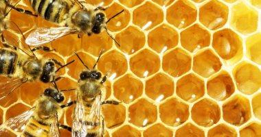 تحفيز ملكة النحل على البيض