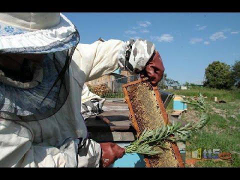 كيف يستخرج العسل من النحل