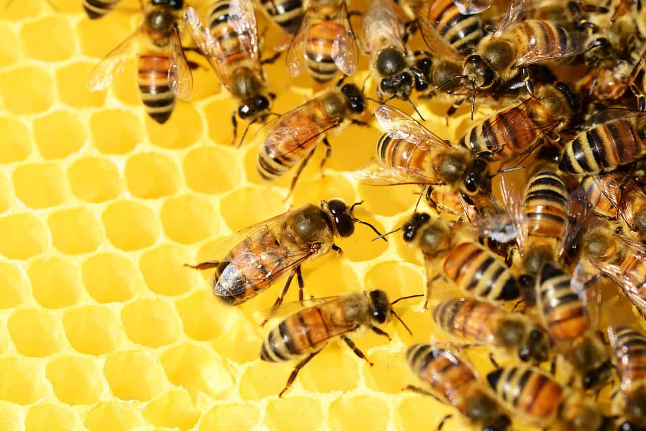 أمراض النحل في فصل الشتاء
