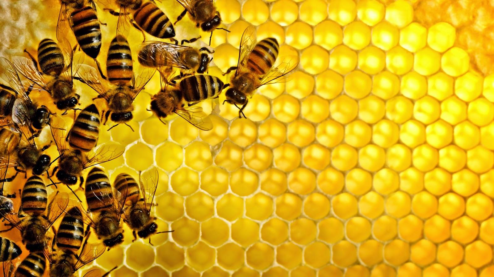 أمراض النحل