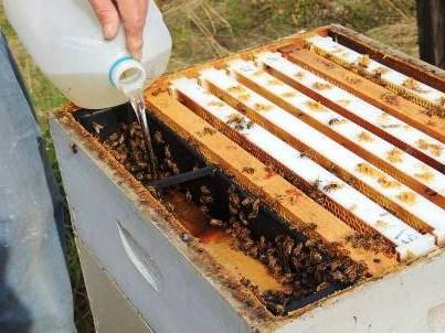 أوقات تغذية النحل
