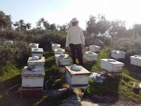 تغذية النحل في فصل الشتاء